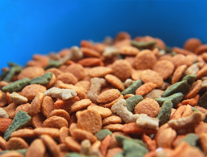 Going Against the Grain: On Food Allergies in Pets